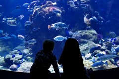 children watching fish swim in an aquarium